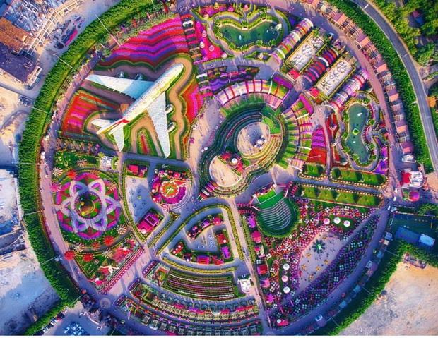 Dubai Miracle Garden – простор полн со мириси и бои