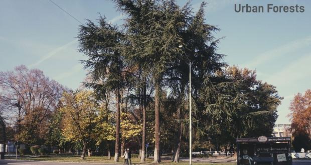 """Денес изложба """"Урбани шуми""""- фотографски проект на Оливер Мусовиќ"""
