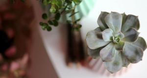 Грижа за собните цвеќиња во текот на зимата