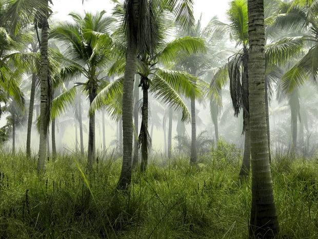 До 2050 година тропските шуми може да произведуваат СО2 наместо да го отстранат
