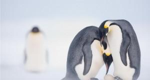 Најдобри фотографии од животни на National Geographic за 2020