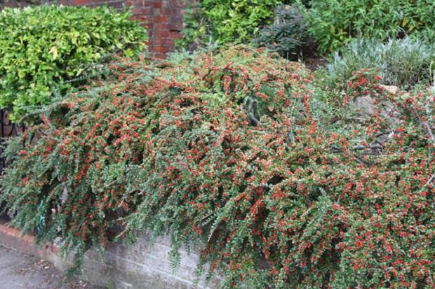 Растение кое го собира загадениот воздух и го прочистува