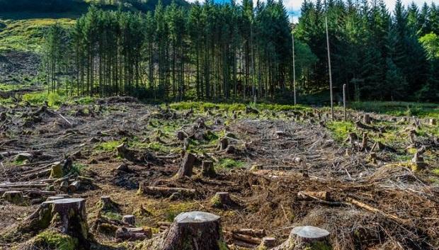 Научници бараат светските лидери да спречат понатамошно уништување на шумите