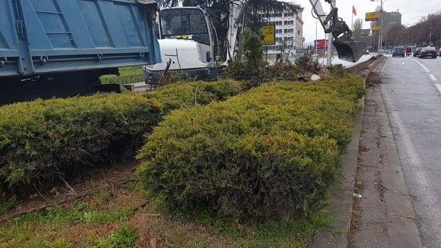 Соопштение на професори по повод отстранување на булеварското зеленило во Скопје