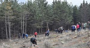 Акција за пошумување на опожарени површини на Осоговските Планини