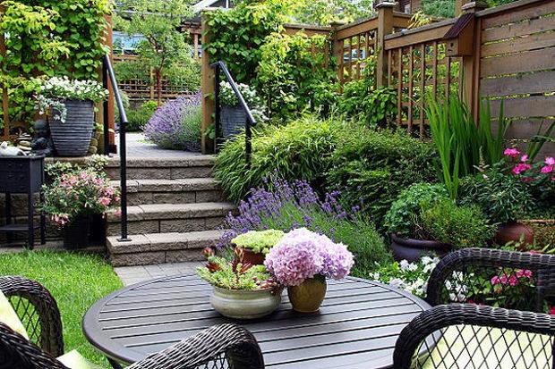Small townhouse perennial summer garden.