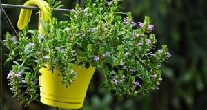 Пет совети како да ги заштитите растенијата од топлина