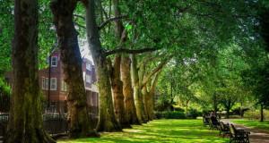 Дрвјата му имаат заштедено милијарди на Лондон
