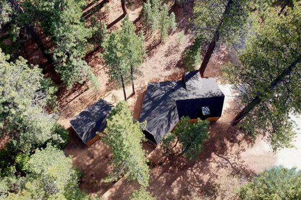 Куќа обвиткана околу дрвја