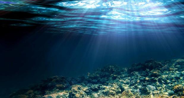 Еколозите предупредуваат: Медитеранот станува тропско море