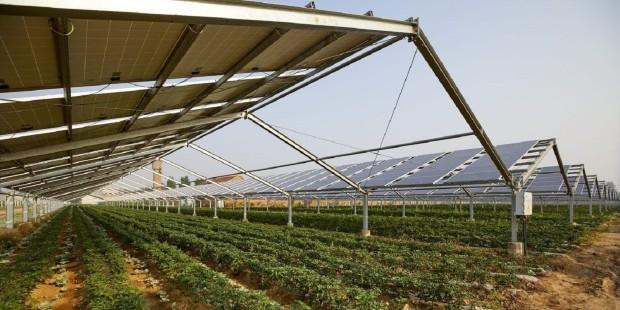 Србија: Најавен е првиот агроенергетски проект на Балканот