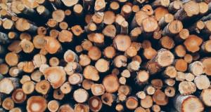 """Директивата за обновлива енергија """"оди"""" против европските шуми"""