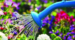 Правилно наводнување на градината во лето