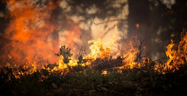 Пожарите предизвикале рекордно ниво на јаглеродни емисии во јули и август