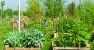 """Скопско """"Бостание"""": Еколошки растенија од урбана градина"""