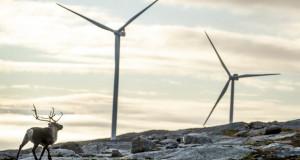 Одгледувачите на ирваси ги победија ветерните електрани: Ќе мора да бидат отстранети 151 турбини?